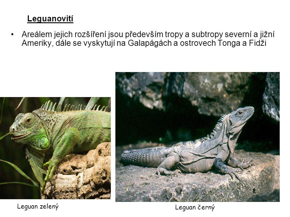 Leguanovití Areálem jejich rozšíření jsou především tropy a subtropy severní a jižní Ameriky, dále se vyskytují na Galapágách a ostrovech Tonga a Fidž