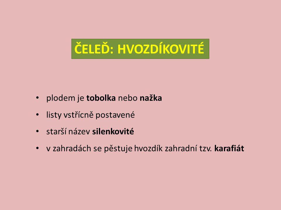 silenka nicí – Silene nutans V: do 40 cm S: chlupatý L: dolní lopatkovité horní kopinaté K: bílé až narůžovělé jednostranně převislé květenství kvete V-VII E: teplomilný druh (1.– 2.
