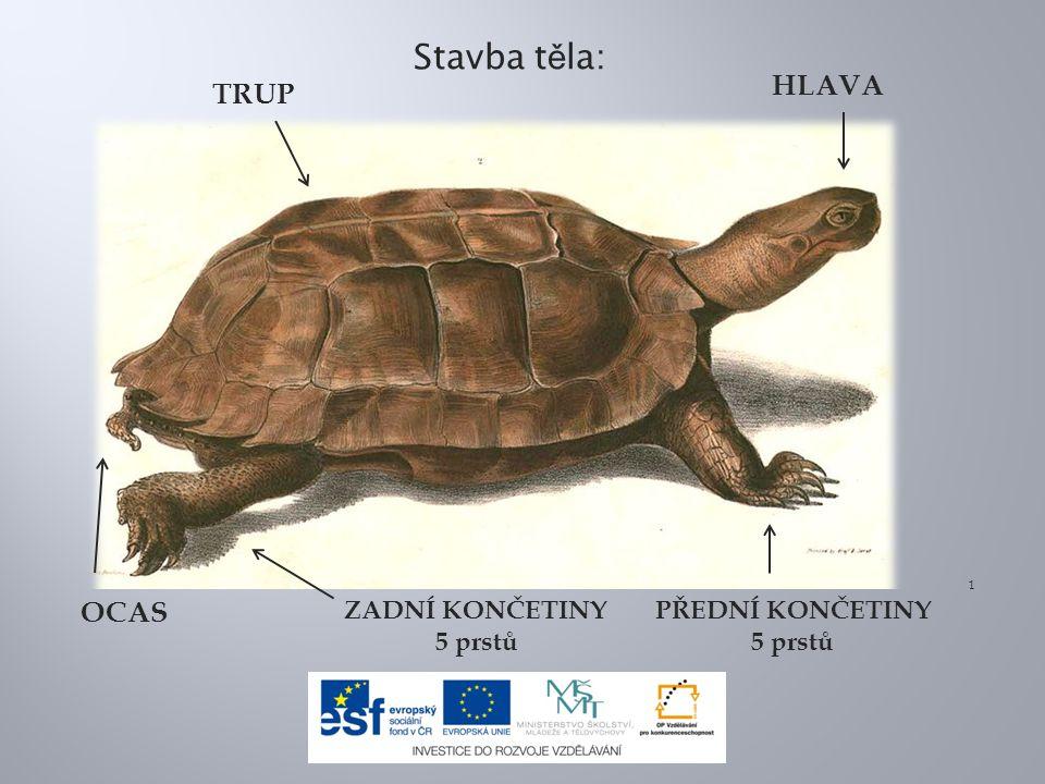 Toto je:a) želva sloní b) kareta obrovská c) želva nádherná 7