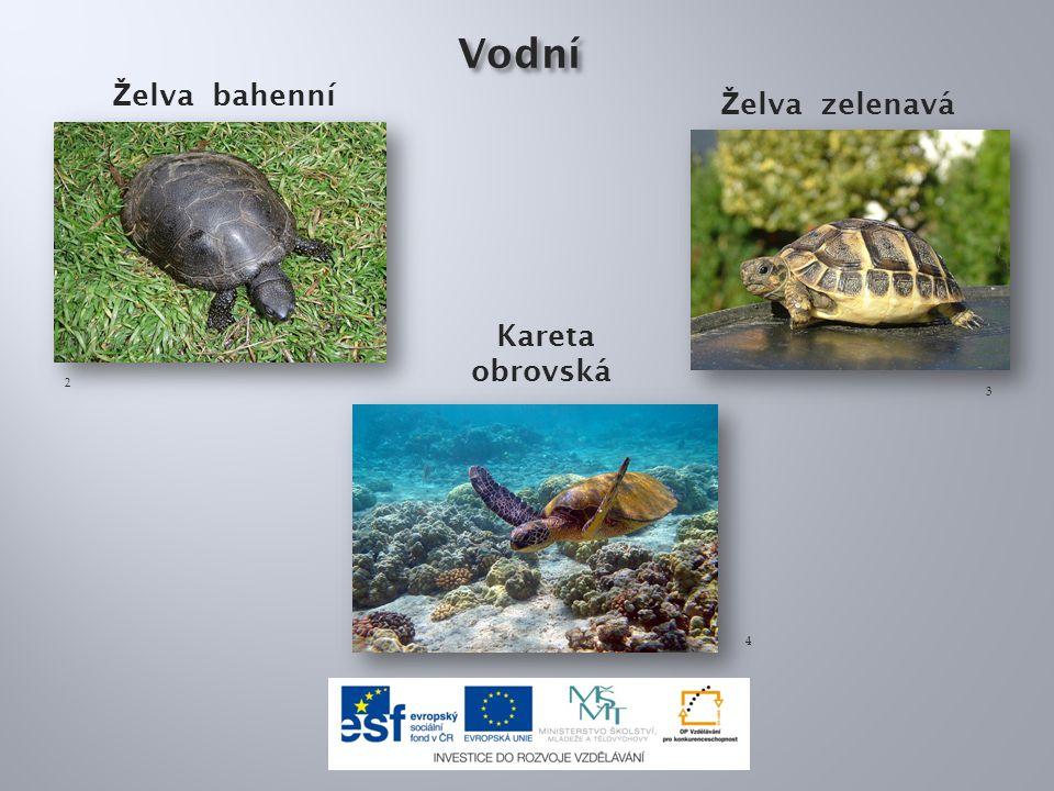 Toto je:a) želva sloní b) želva nádherná c) želva bahenní 8