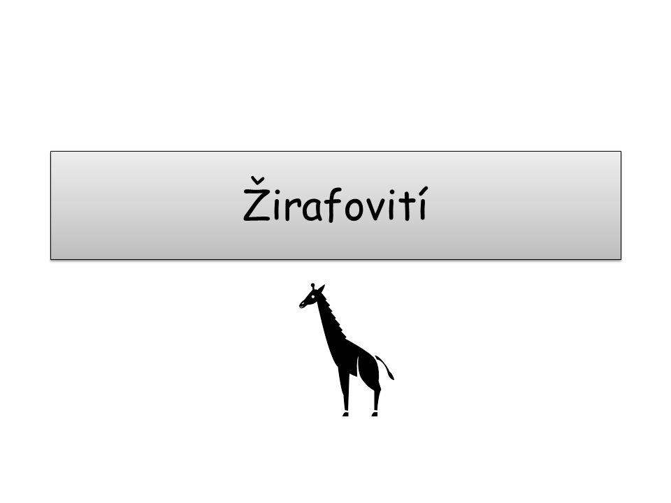 Žirafovití