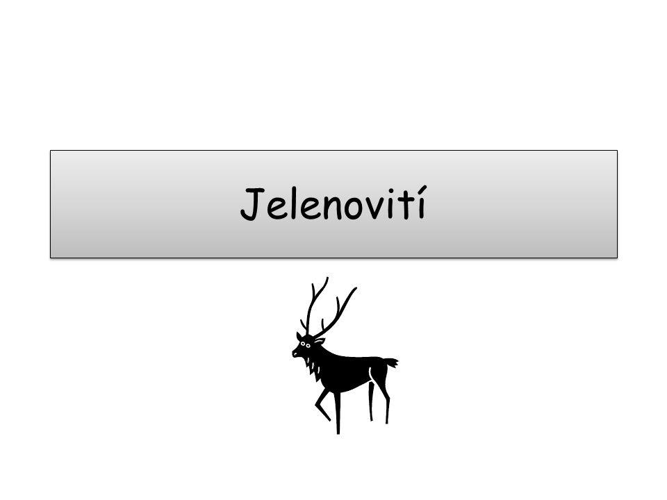Jelenovití