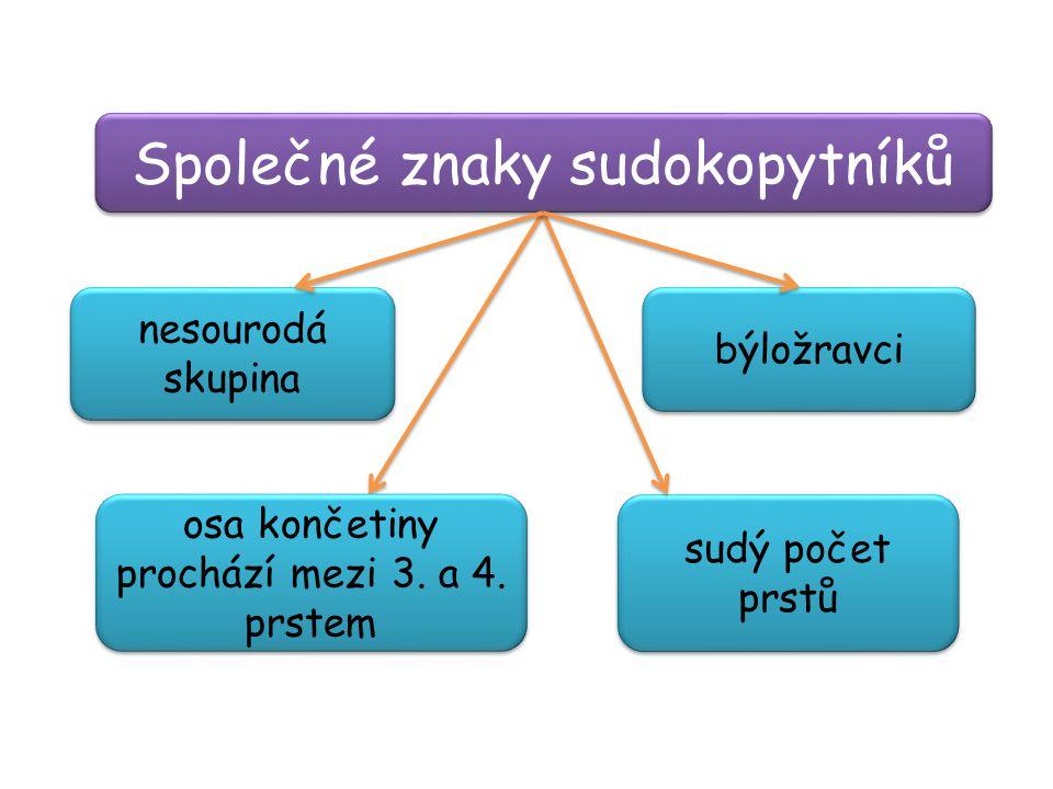 Společné znaky sudokopytníků sudý počet prstů býložravci nesourodá skupina osa končetiny prochází mezi 3. a 4. prstem