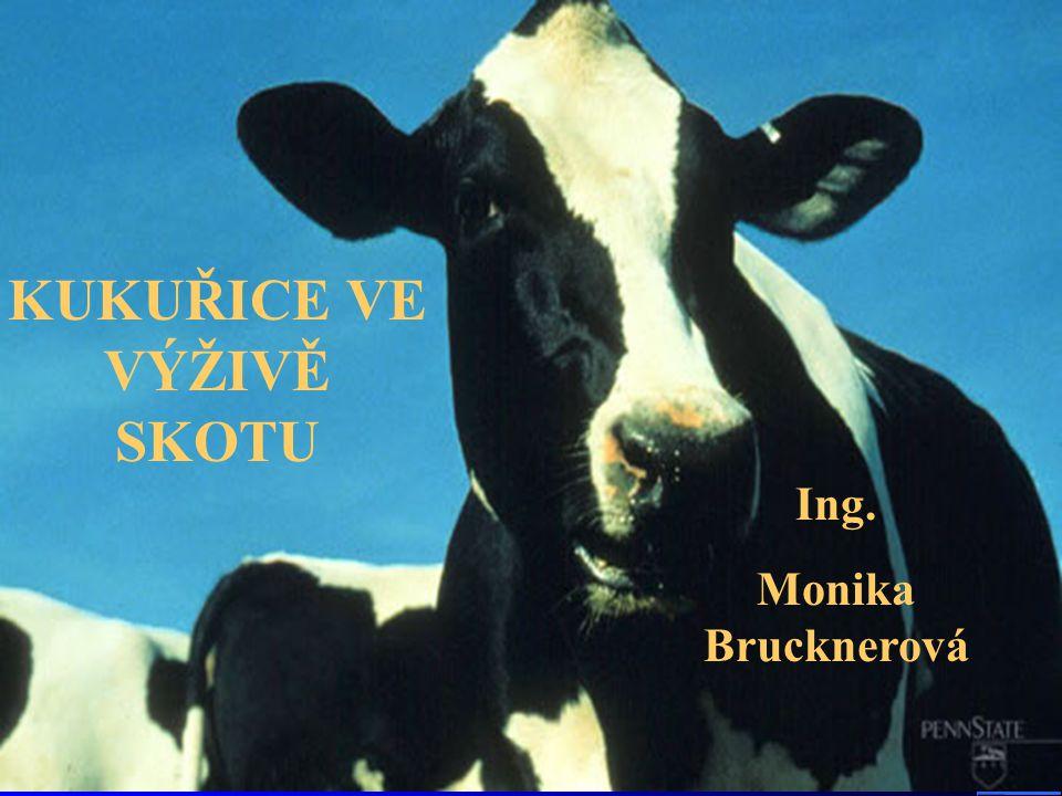 KUKUŘICE VE VÝŽIVĚ SKOTU Ing. Monika Brucknerová