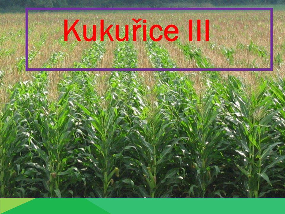 Ošetřování kukuřice: 1.Mechanické ošetření: je založeno na:  provzdušnění půdy  rozrušení půdního škraloupu  hubení plevelů Zajišťuje se: lehkými bránami- vláčení a) před b) po vzejití plečkování během vegetace (1-2x)