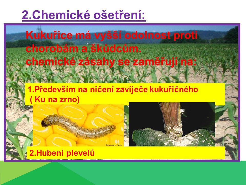 2.Chemické ošetření: Kukuřice má vyšší odolnost proti chorobám a škůdcům. chemické zásahy se zaměřují na: 1.Především na ničení zavíječe kukuřičného (