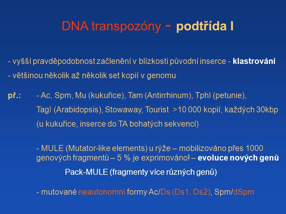 DNA transpozóny - podtřída I - vyšší pravděpodobnost začlenění v blízkosti původní inserce - klastrování - většinou několik až několik set kopií v genomu př.: - Ac, Spm, Mu (kukuřice), Tam (Antirrhinum), TphI (petunie), TagI (Arabidopsis), Stowaway, Tourist >10 000 kopií, každých 30kbp (u kukuřice, inserce do TA bohatých sekvencí) - MULE (Mutator-like elements) u rýže – mobilizováno přes 1000 genových fragmentů – 5 % je exprimováno.