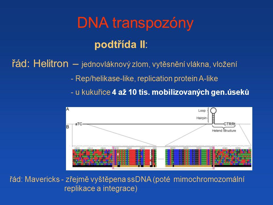 DNA transpozóny podtřída II: řád: Helitron – jednovláknový zlom, vytěsnění vlákna, vložení - Rep/helikase-like, replication protein A-like - u kukuřic