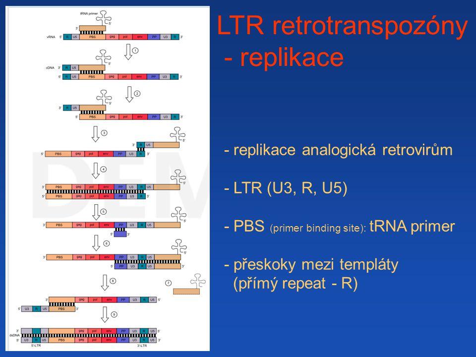 LTR retrotranspozóny - replikace - replikace analogická retrovirům - LTR (U3, R, U5) - PBS (primer binding site): tRNA primer - přeskoky mezi templáty (přímý repeat - R)