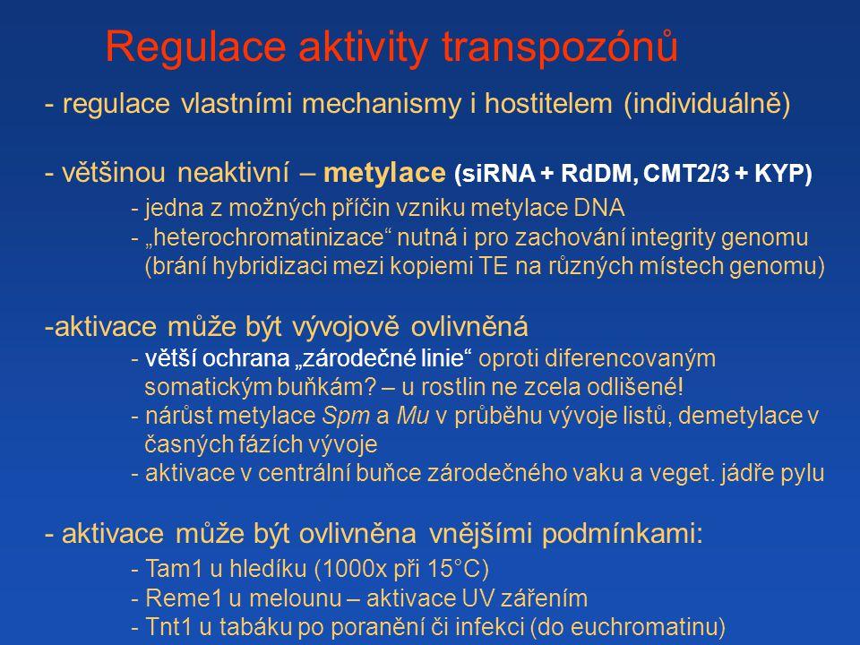 """Regulace aktivity transpozónů - regulace vlastními mechanismy i hostitelem (individuálně) - většinou neaktivní – metylace (siRNA + RdDM, CMT2/3 + KYP) - jedna z možných příčin vzniku metylace DNA - """"heterochromatinizace nutná i pro zachování integrity genomu (brání hybridizaci mezi kopiemi TE na různých místech genomu) -aktivace může být vývojově ovlivněná - větší ochrana """"zárodečné linie oproti diferencovaným somatickým buňkám."""