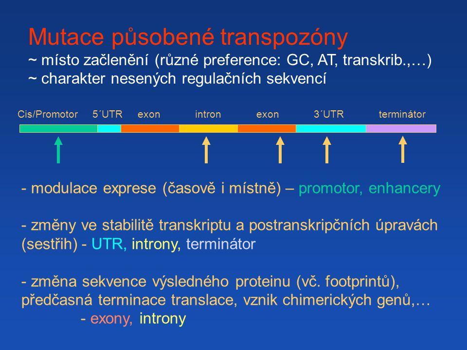 Mutace působené transpozóny ~ místo začlenění (různé preference: GC, AT, transkrib.,…) ~ charakter nesených regulačních sekvencí Cis/Promotor 5´UTR exon intron exon 3´UTR terminátor - modulace exprese (časově i místně) – promotor, enhancery - změny ve stabilitě transkriptu a postranskripčních úpravách (sestřih) - UTR, introny, terminátor - změna sekvence výsledného proteinu (vč.