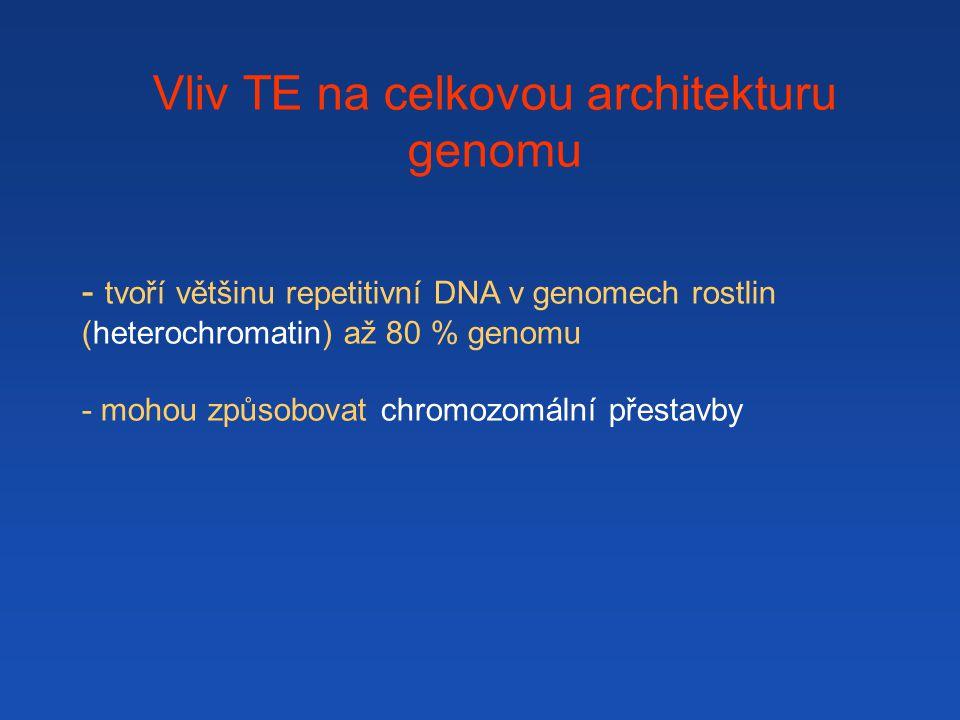 Vliv TE na celkovou architekturu genomu - tvoří většinu repetitivní DNA v genomech rostlin (heterochromatin) až 80 % genomu - mohou způsobovat chromozomální přestavby