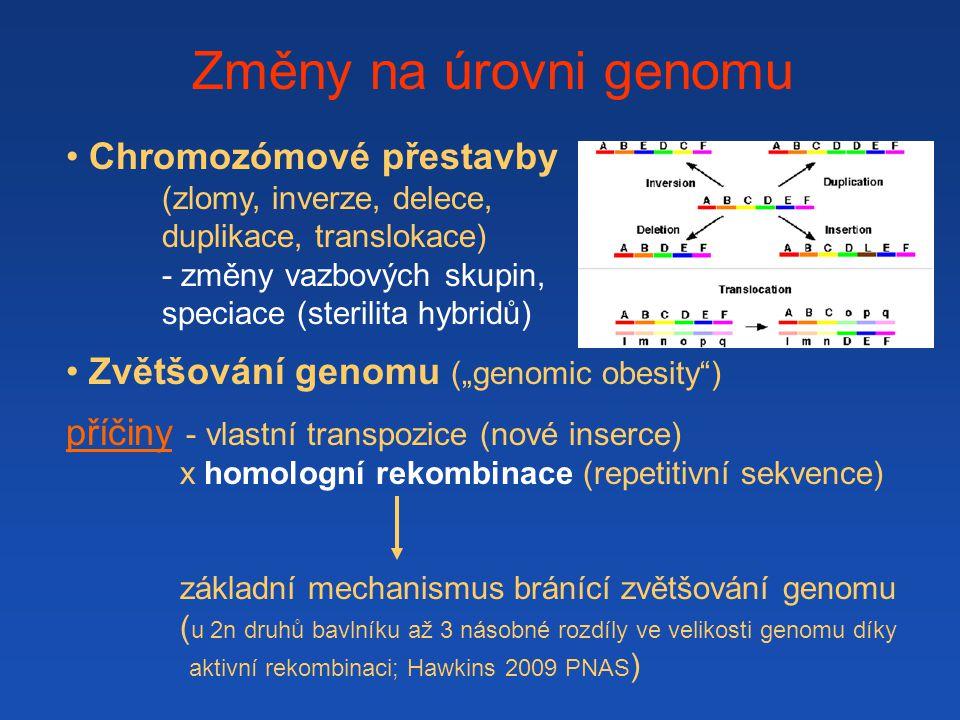 """Změny na úrovni genomu Chromozómové přestavby (zlomy, inverze, delece, duplikace, translokace) - změny vazbových skupin, speciace (sterilita hybridů) Zvětšování genomu (""""genomic obesity ) příčiny - vlastní transpozice (nové inserce) x homologní rekombinace (repetitivní sekvence) základní mechanismus bránící zvětšování genomu ( u 2n druhů bavlníku až 3 násobné rozdíly ve velikosti genomu díky aktivní rekombinaci; Hawkins 2009 PNAS )"""