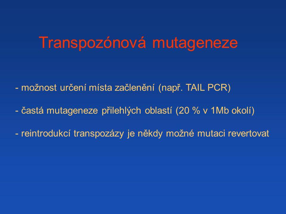 - možnost určení místa začlenění (např. TAIL PCR) - častá mutageneze přilehlých oblastí (20 % v 1Mb okolí) - reintrodukcí transpozázy je někdy možné m