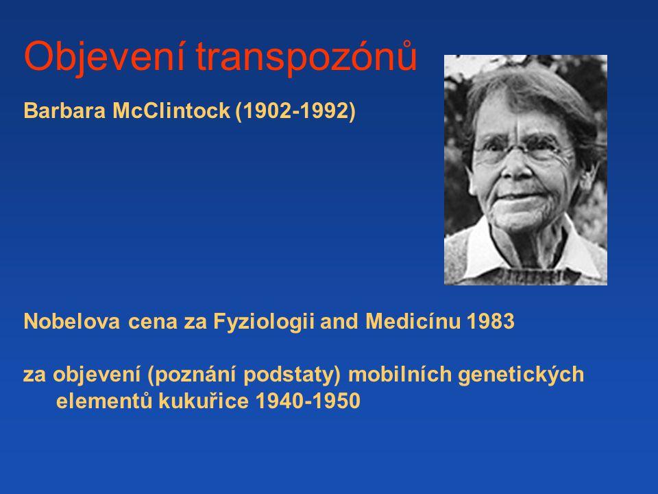 Objevení transpozónů Barbara McClintock (1902-1992) Nobelova cena za Fyziologii and Medicínu 1983 za objevení (poznání podstaty) mobilních genetických elementů kukuřice 1940-1950