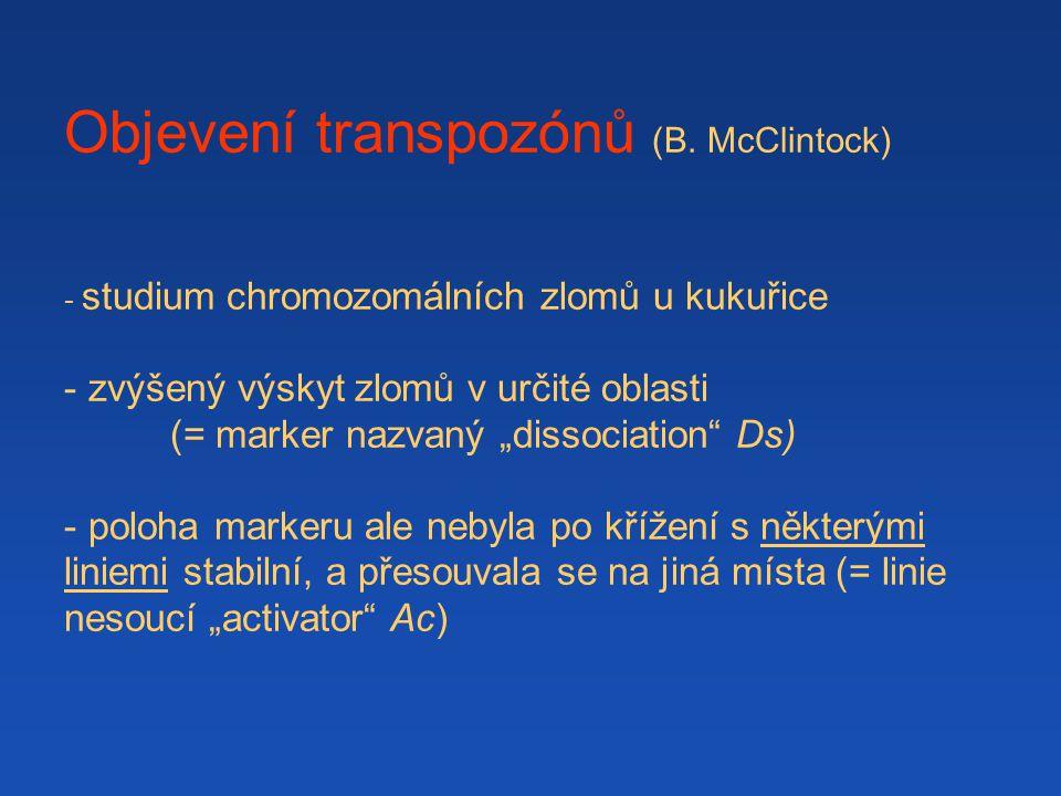 """Objevení transpozónů (B. McClintock) - studium chromozomálních zlomů u kukuřice - zvýšený výskyt zlomů v určité oblasti (= marker nazvaný """"dissociatio"""