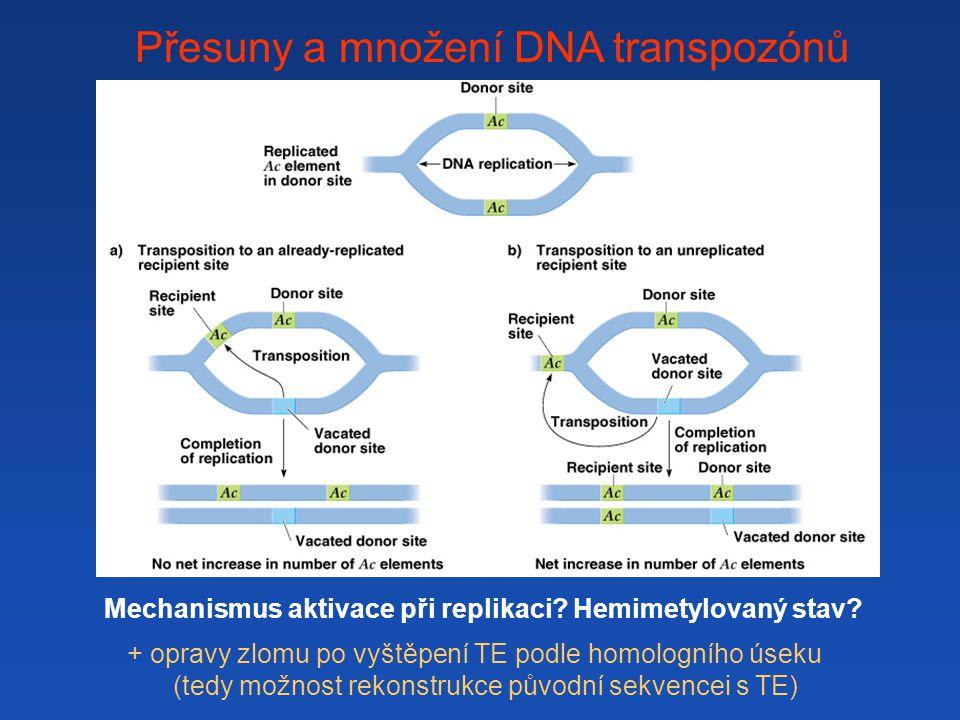 Přesuny a množení DNA transpozónů + opravy zlomu po vyštěpení TE podle homologního úseku (tedy možnost rekonstrukce původní sekvencei s TE) Mechanismus aktivace při replikaci?Hemimetylovaný stav?