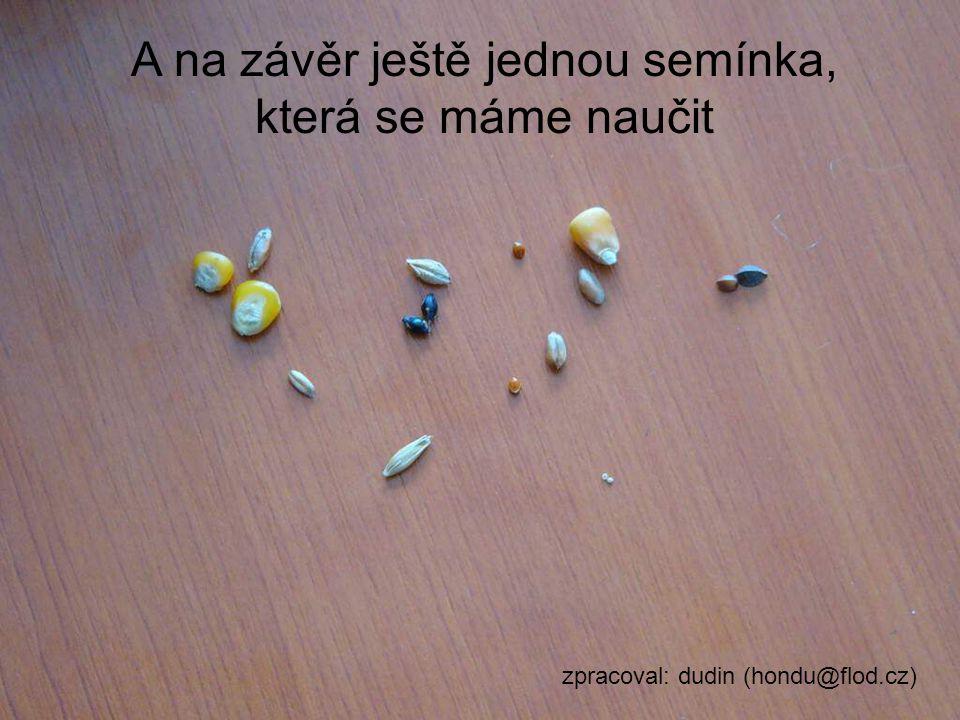 Kukuřice obecná A na závěr ještě jednou semínka, která se máme naučit zpracoval: dudin (hondu@flod.cz)