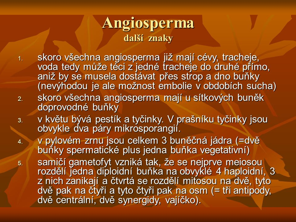 Angiosperma další znaky 1. skoro všechna angiosperma již mají cévy, tracheje, voda tedy může téci z jedné tracheje do druhé přímo, aniž by se musela d