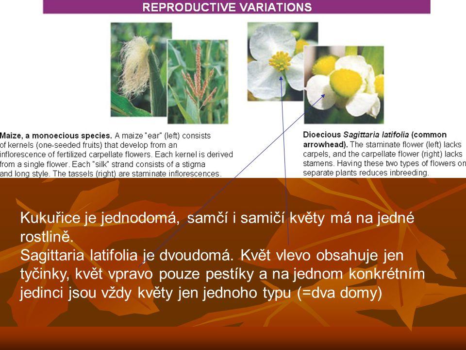 Kukuřice je jednodomá, samčí i samičí květy má na jedné rostlině. Sagittaria latifolia je dvoudomá. Květ vlevo obsahuje jen tyčinky, květ vpravo pouze