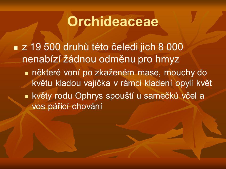 Orchideaceae z 19 500 druhů této čeledi jich 8 000 nenabízí žádnou odměnu pro hmyz některé voní po zkaženém mase, mouchy do květu kladou vajíčka v rám