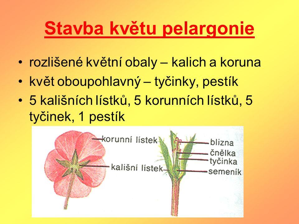 Stavba květu pelargonie rozlišené květní obaly – kalich a koruna květ oboupohlavný – tyčinky, pestík 5 kališních lístků, 5 korunních lístků, 5 tyčinek