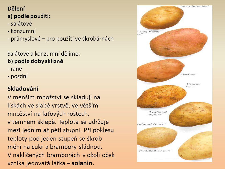 Dělení a) podle použití: - salátové - konzumní - průmyslové – pro použití ve škrobárnách Salátové a konzumní dělíme: b) podle doby sklizně - rané - po
