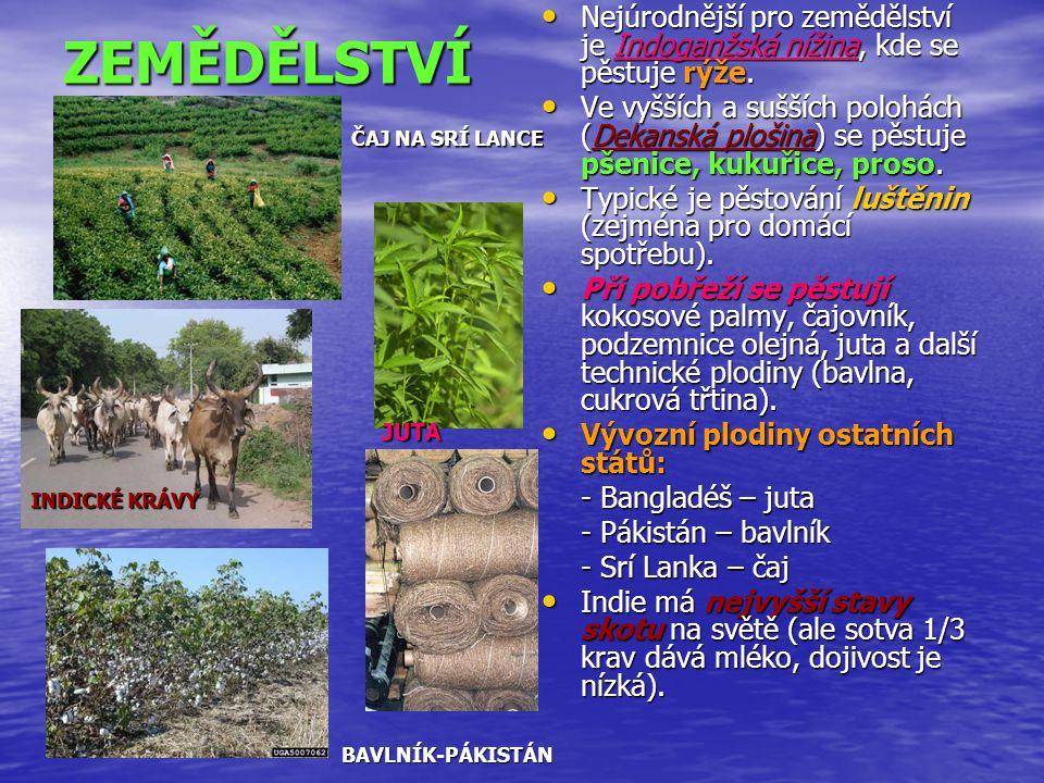 ZEMĚDĚLSTVÍ Nejúrodnější pro zemědělství je Indoganžská nížina, kde se pěstuje rýže. Nejúrodnější pro zemědělství je Indoganžská nížina, kde se pěstuj