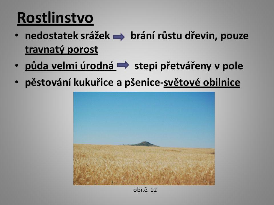 Rostlinstvo nedostatek srážek brání růstu dřevin, pouze travnatý porost půda velmi úrodná stepi přetvářeny v pole pěstování kukuřice a pšenice-světové obilnice obr.č.