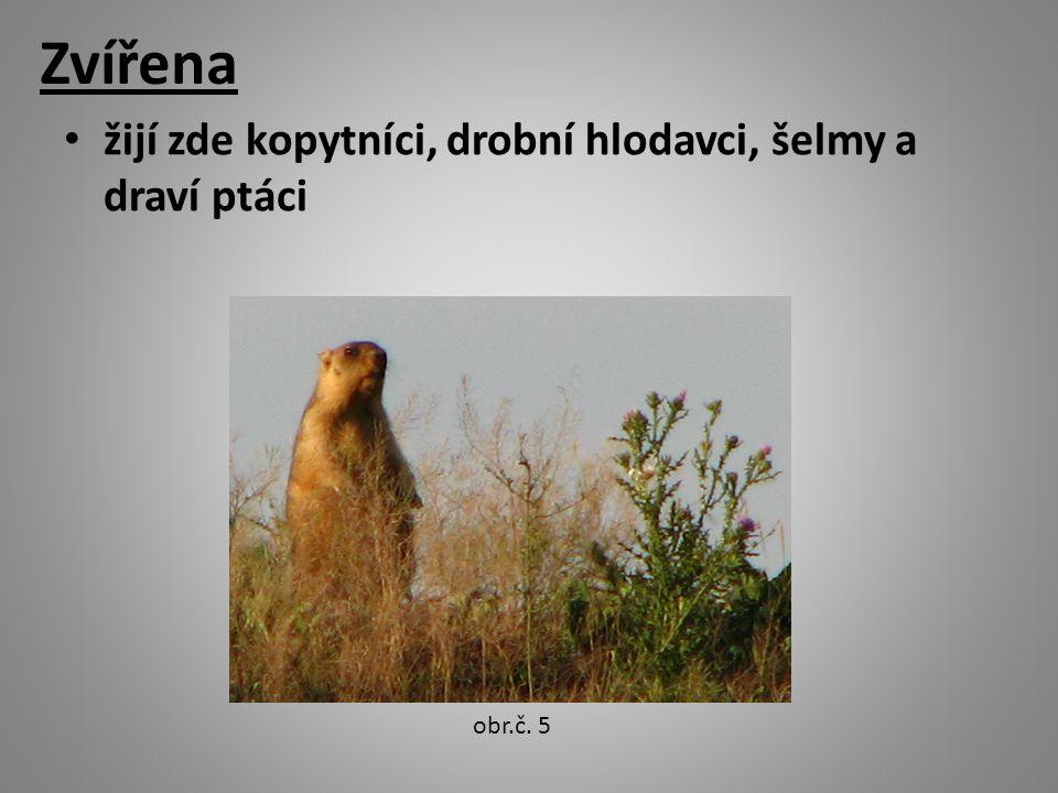 Zvířena žijí zde kopytníci, drobní hlodavci, šelmy a draví ptáci obr.č. 5