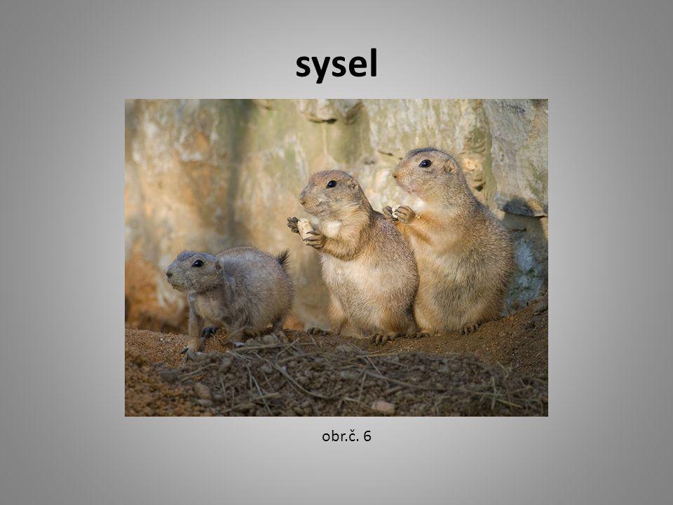 sysel obr.č. 6