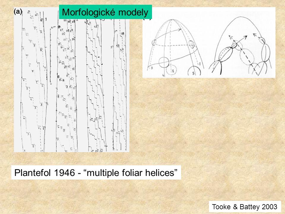 "Plantefol 1946 - ""multiple foliar helices"" Morfologické modely Tooke & Battey 2003"
