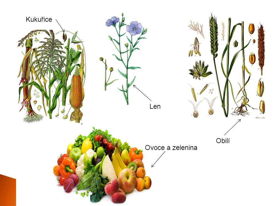 Len Kukuřice Ovoce a zelenina Obilí