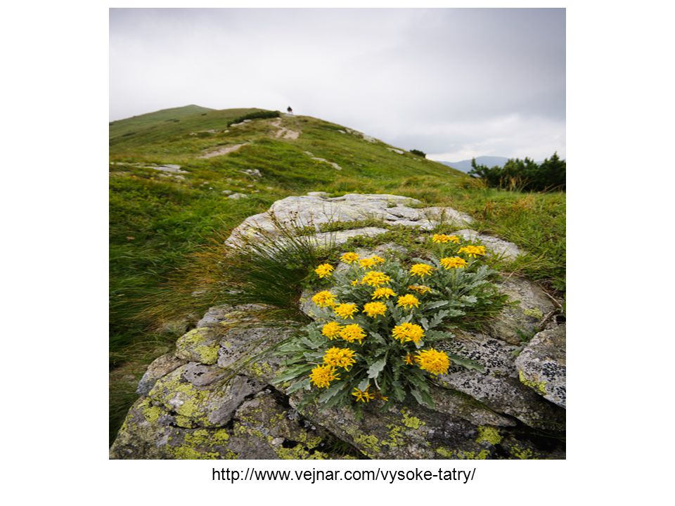 http://www.vejnar.com/vysoke-tatry/