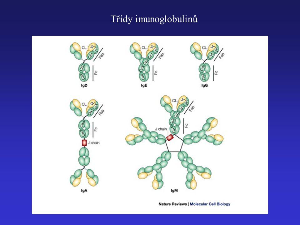 Třídy imunoglobulinů