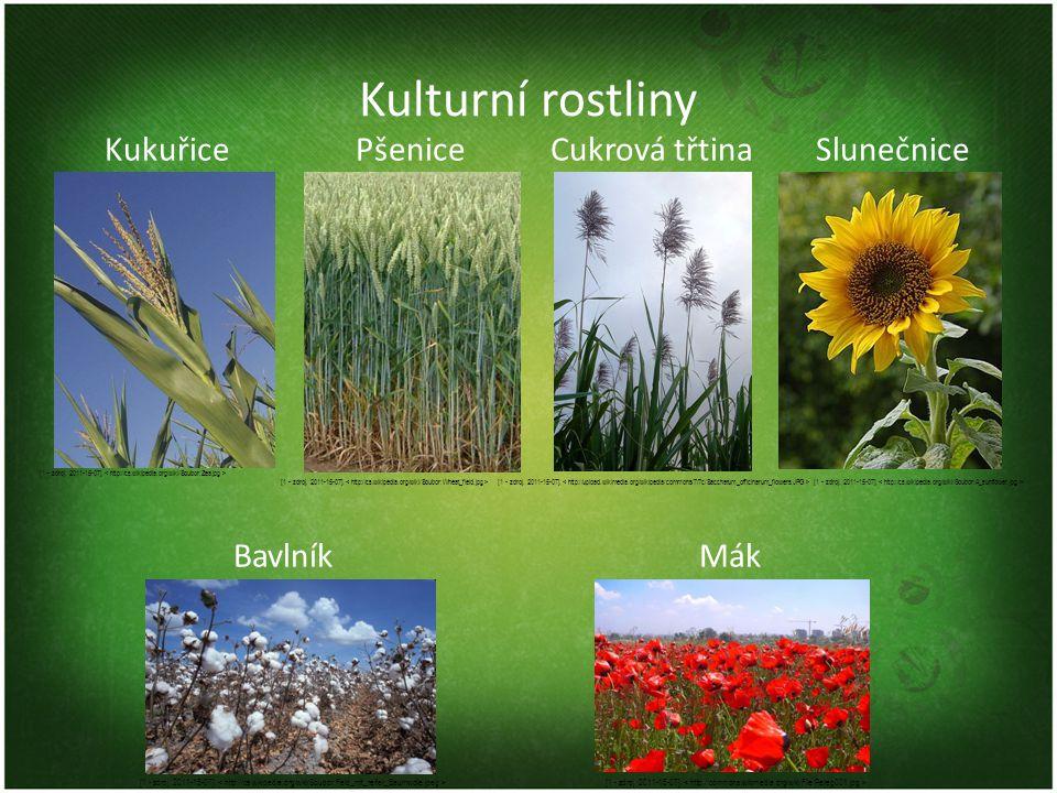Kulturní rostliny Kukuřice Pšenice Cukrová třtina Slunečnice BavlníkMák [1 - zdroj. 2011-15-07].