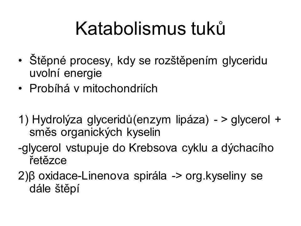 Katabolismus tuků Štěpné procesy, kdy se rozštěpením glyceridu uvolní energie Probíhá v mitochondriích 1) Hydrolýza glyceridů(enzym lipáza) - > glycer