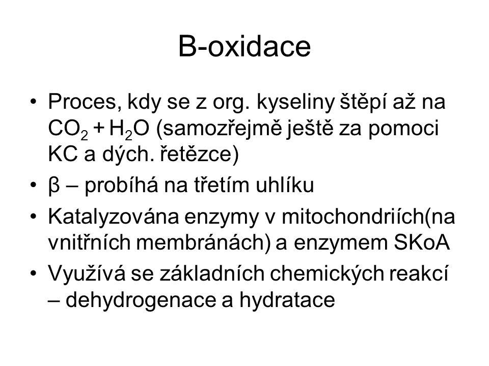 Β-oxidace Proces, kdy se z org. kyseliny štěpí až na CO 2 + H 2 O (samozřejmě ještě za pomoci KC a dých. řetězce) β – probíhá na třetím uhlíku Katalyz