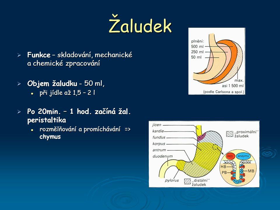 Žaludek  Funkce – skladování, mechanické a chemické zpracování  Objem žaludku - 50 ml, při jídle až 1,5 – 2 l při jídle až 1,5 – 2 l  Po 20min.