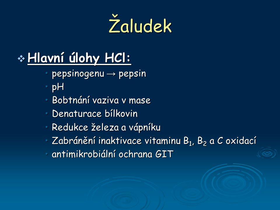 Žaludek  Hlavní úlohy HCl: pepsinogenu → pepsinpepsinogenu → pepsin pHpH Bobtnání vaziva v maseBobtnání vaziva v mase Denaturace bílkovinDenaturace bílkovin Redukce železa a vápníkuRedukce železa a vápníku Zabránění inaktivace vitaminu B 1, B 2 a C oxidacíZabránění inaktivace vitaminu B 1, B 2 a C oxidací antimikrobiální ochrana GITantimikrobiální ochrana GIT