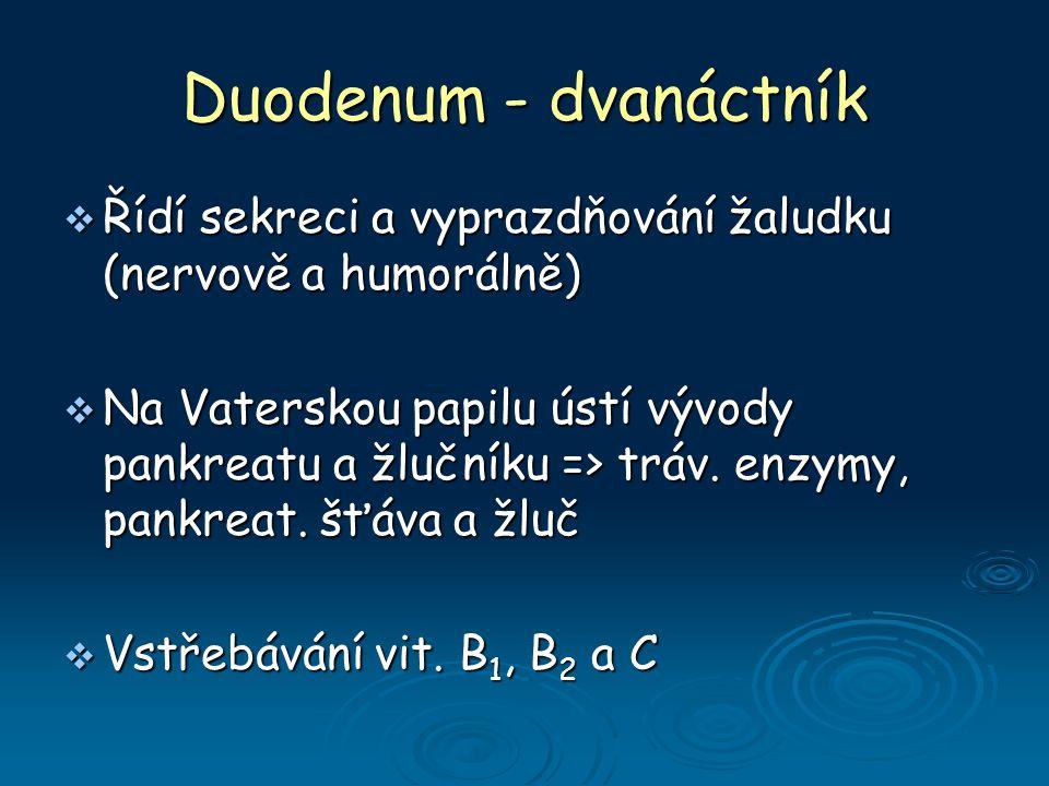 Duodenum - dvanáctník  Řídí sekreci a vyprazdňování žaludku (nervově a humorálně)  Na Vaterskou papilu ústí vývody pankreatu a žlučníku => tráv.