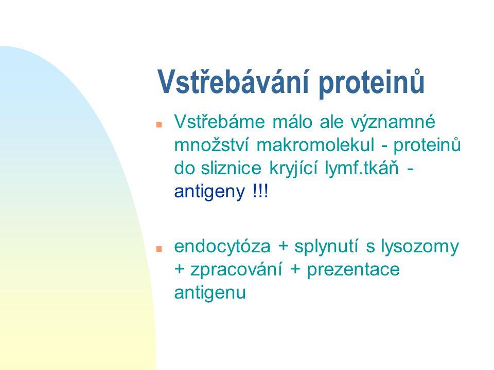 Vstřebávání proteinů n Vstřebáme málo ale významné množství makromolekul - proteinů do sliznice kryjící lymf.tkáň - antigeny !!! n endocytóza + splynu
