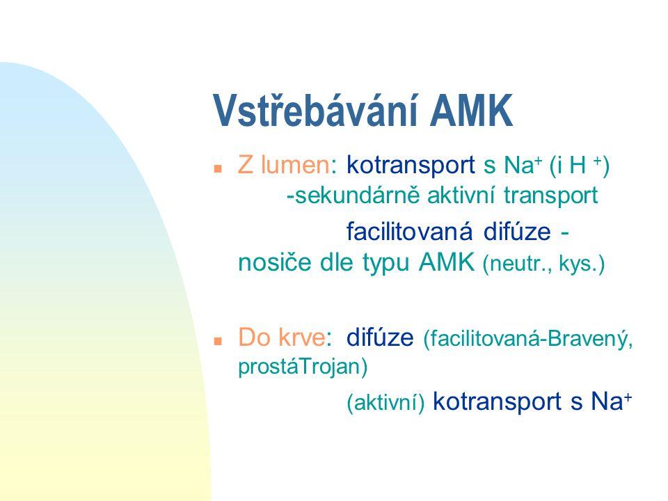 Vstřebávání AMK n Z lumen:kotransport s Na + (i H + ) -sekundárně aktivní transport facilitovaná difúze - nosiče dle typu AMK (neutr., kys.) n Do krve