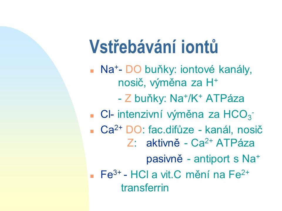 Vstřebávání iontů n Na + - DO buňky: iontové kanály, nosič, výměna za H + - Z buňky: Na + /K + ATPáza n Cl- intenzivní výměna za HCO 3 - n Ca 2+ DO: f