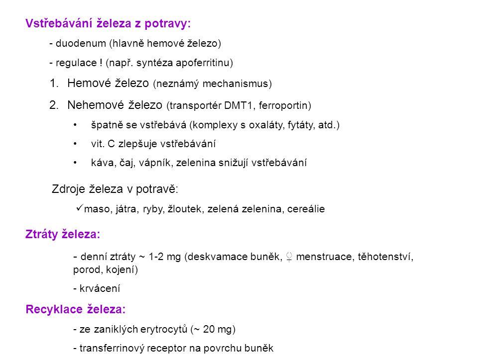Vstřebávání železa z potravy: - duodenum (hlavně hemové železo) - regulace ! (např. syntéza apoferritinu) 1.Hemové železo (neznámý mechanismus) 2.Nehe