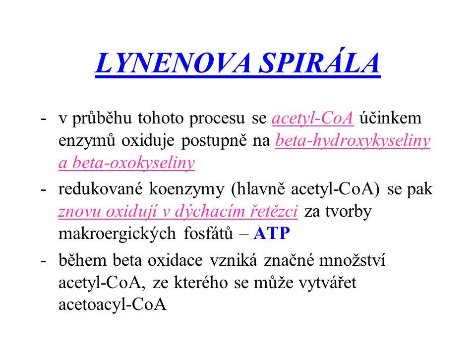 LYNENOVA SPIRÁLA -v průběhu tohoto procesu se acetyl-CoA účinkem enzymů oxiduje postupně na beta-hydroxykyseliny a beta-oxokyseliny -redukované koenzy