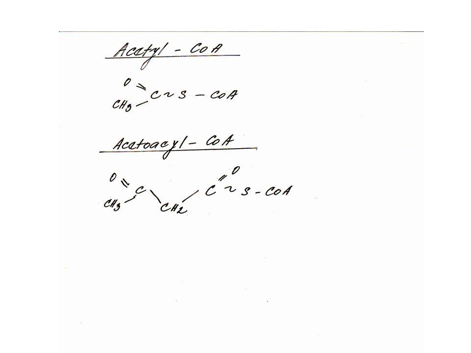 Acetoacyl-CoA -větší množství se může objevit např.
