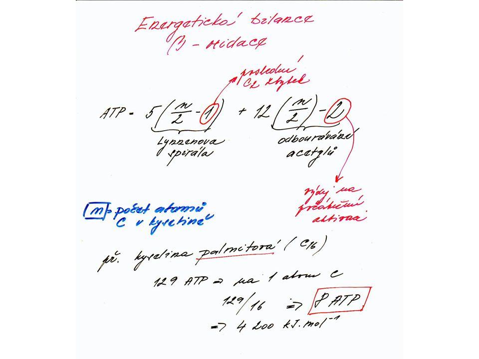 ENERGETIKA CYKLU -při jedné otočce se tedy získá: -1 mol FADH 2 a 1 mol NADH – po jejich reoxidaci v DŘ vzniká 5 mol ATP -dalších 12 mol ATP vzniká při aerobním odbourávání