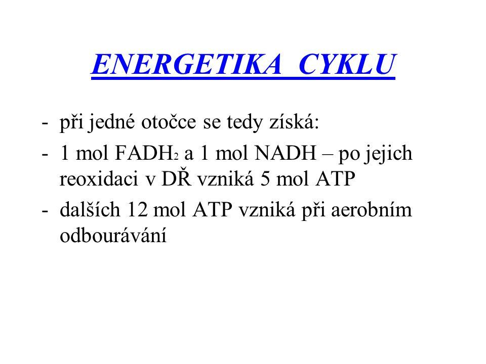 ENERGETIKA CYKLU -při jedné otočce se tedy získá: -1 mol FADH 2 a 1 mol NADH – po jejich reoxidaci v DŘ vzniká 5 mol ATP -dalších 12 mol ATP vzniká př