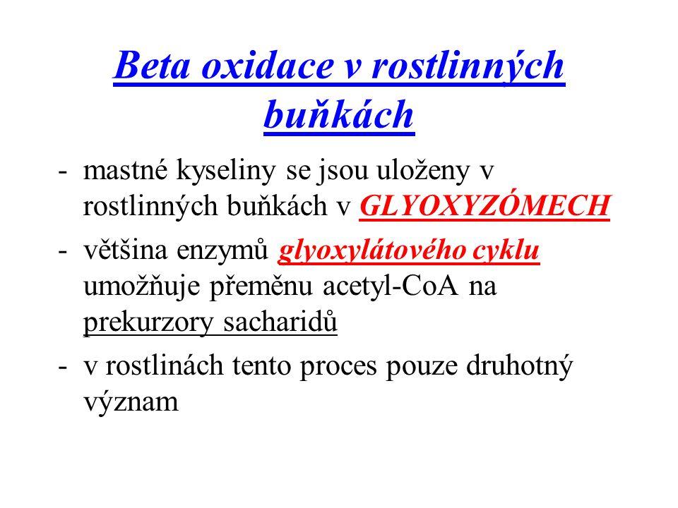 Beta oxidace v rostlinných buňkách -mastné kyseliny se jsou uloženy v rostlinných buňkách v GLYOXYZÓMECH -většina enzymů glyoxylátového cyklu umožňuje